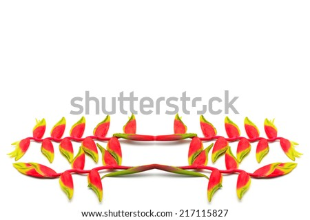 Tropical red Hanging Heliconia or Hanging Lobster Claw, Heliconia rostracta, isolated on a white background - stock photo
