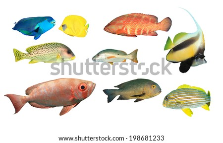 Tropical Reef Fish Collection isolated on white background - stock photo