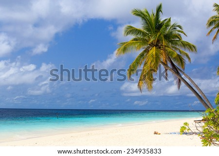 tropical sand beach with palm trees - stock photo