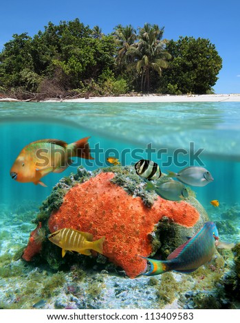 Tropical sea over-under view with Caribbean beach and below waterline, red encrusting sponge with coral and tropical fish - stock photo
