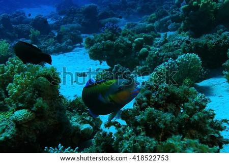 tropical sea underwater landscape - stock photo