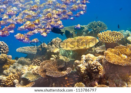 Tropical small fishes and corals - stock photo
