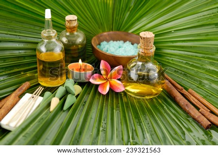 tropical spa and palm leaf  - stock photo