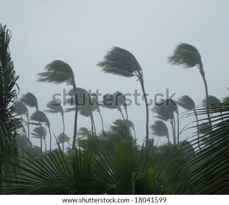 Tropical storm with a lot of rain - stock photo