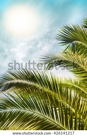 Tropical sun over palm tree leaves. Warm background  - stock photo