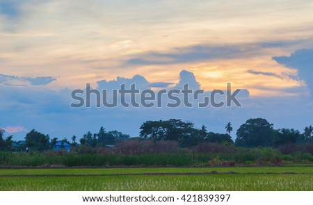 Tropical sunset on the green rice farm, Thailand - stock photo
