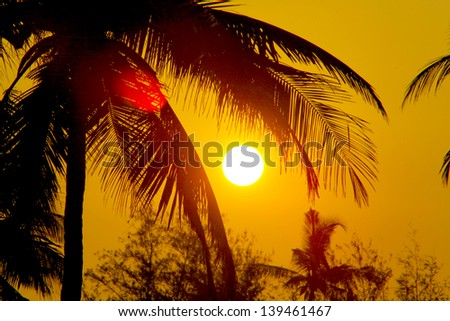 Tropical sunset, palm trees and big sun - stock photo
