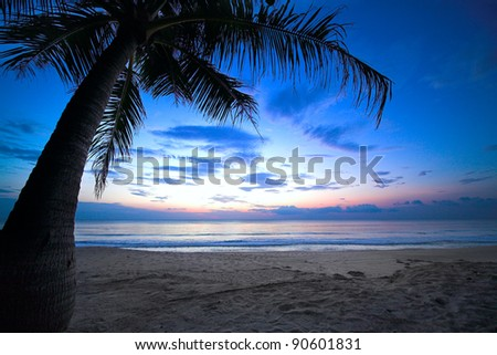 tropical sunset with palm tree and cloudy sky - stock photo