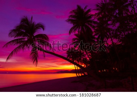 Tropical sunset with palm trees on the beach - stock photo