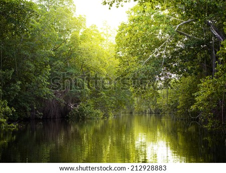 Tropical thickets mangrove forest on the Black river. Jamaica. - stock photo