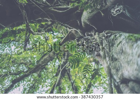 tropical tree branches upwards. Crohn's tree in the tropical jungle on the background of sky. - stock photo