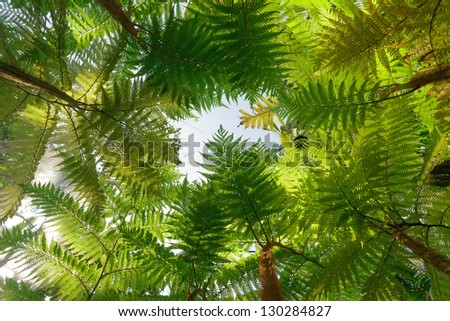 Tropical tree fern background - stock photo