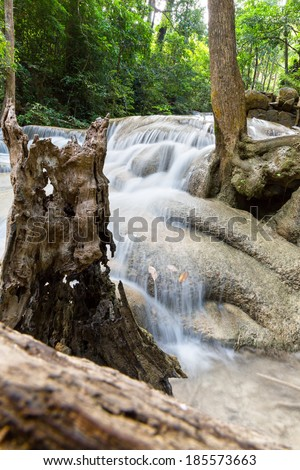 Tropical tree roots and water - stock photo
