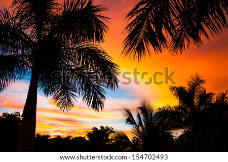 Tropical trees by the beach in Central AMerica, Guanacaste, Costa Rica - stock photo
