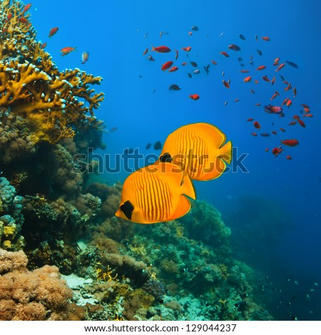tropical underwater template beautiful coral reef full of different color fishes - stock photo