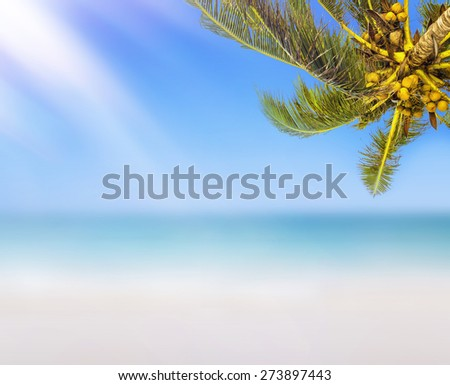 Tropical white sand beach background. Sunshine, coconut palm tree and blurry ocean.  - stock photo