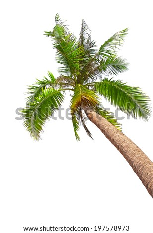 Tropical white sand beach with palm tree. Koh Kood, Thailand - stock photo