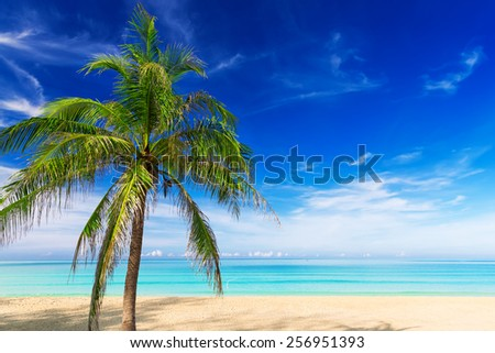 Tropical white sand with palm tree on the beach Phuket. Thailand - stock photo