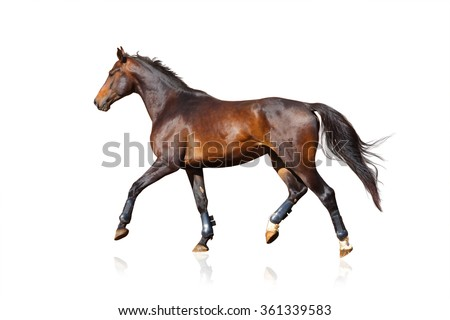 Trotting horse in horse shoes isolated over a white background - stock photo