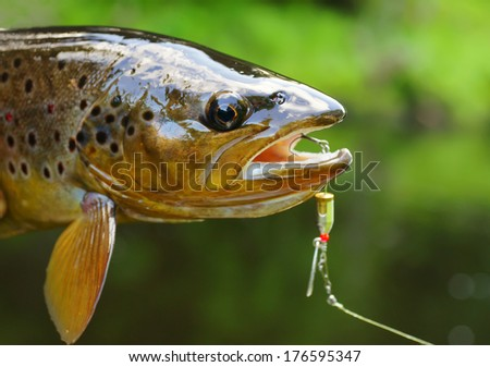 Trout head with lure. - stock photo