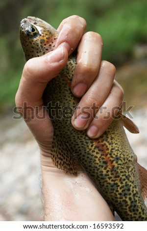 Trout in a hand of the fisherman - stock photo