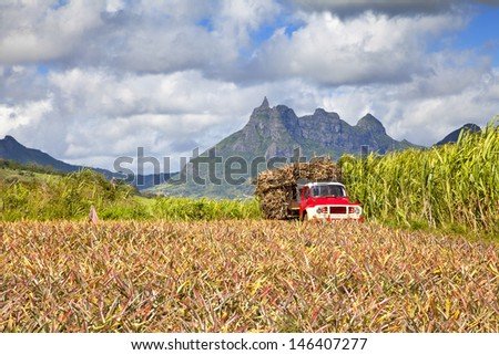 Truck with Sugar cane at Mauritius. In front a pinapples field, background the mountains of the island. - stock photo