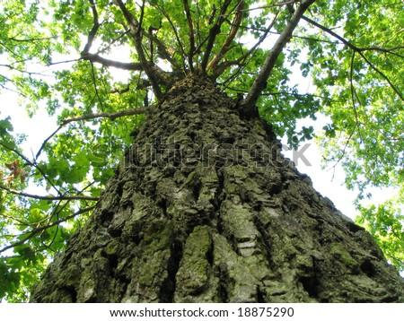Trunk of tree - stock photo