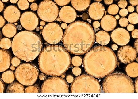 Trunk Texture - stock photo