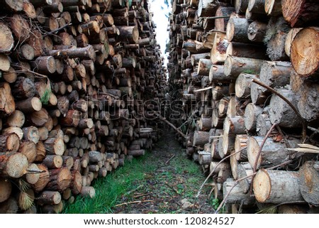 trunks felled and piled up for the industry - stock photo