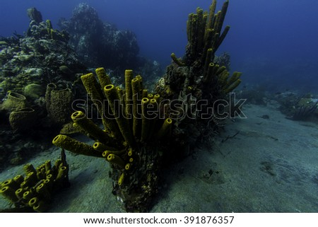 Tube sponges covering the reef - stock photo