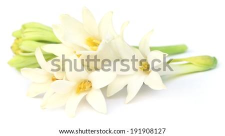 Tuberose or Rajnigandha of Southeast Asia over white background - stock photo