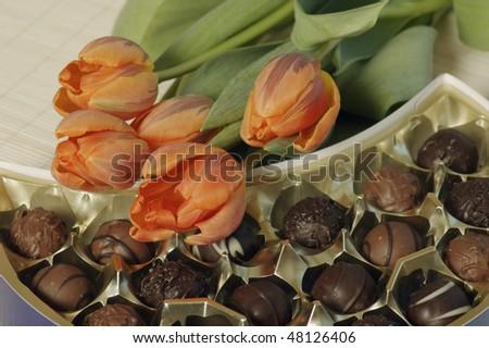 Tulip and chocolates - stock photo