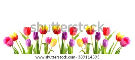 Tulip. Beautiful bouquet of tulips. Colorful tulips. Tulips in spring. Tulips red and yellow. Tulip on white background. Tulip red and tulip yellow. Tulips pink.  - stock photo