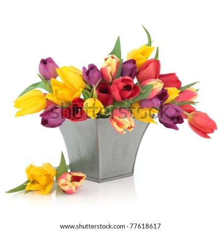 Tulip flower arrangement in rainbow colours in a distressed pewter vase and loose isolated over white background. - stock photo