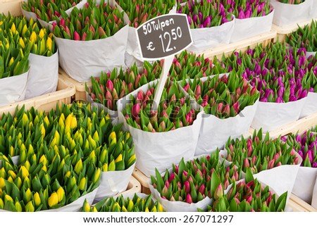Tulip flowers from Holland for sale , Amsterdam floral market. - stock photo