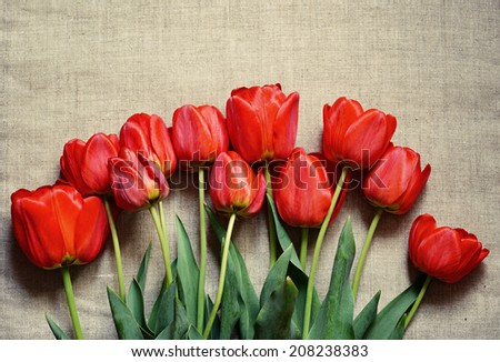 Tulip flowers on canvas background - stock photo