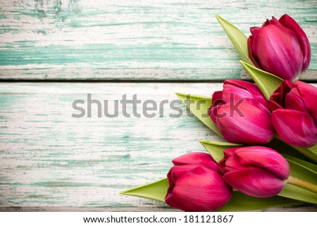 Tulip on the wooden background. - stock photo