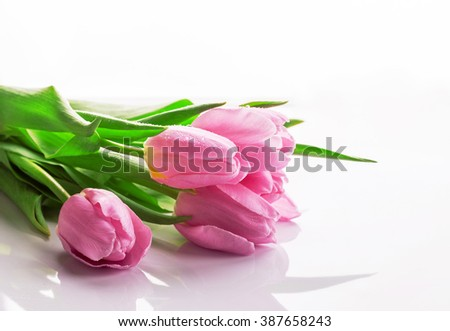 Tulip. Pinktulips, bouquet of tulips, tulips macro, tulips in bouquet, beautiful tulips, colorful tulips, green tulips petals, tulips on white, isolated tulips on white background. - stock photo