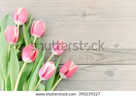 Tulip. Red tulips on wooden background. Tulip. Red tulips, bouquet of tulips, tulips macro, tulips in bouquet, beautiful tulips, colorful tulips, green tulips petals, tulips on wood.Tulips for love. - stock photo