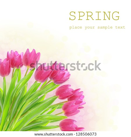 Tulip spring pink flowers with  bokeh and sample text - stock photo