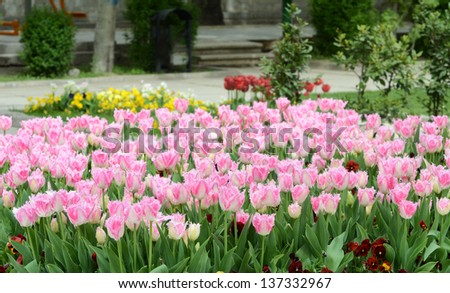 Tulips at park - stock photo