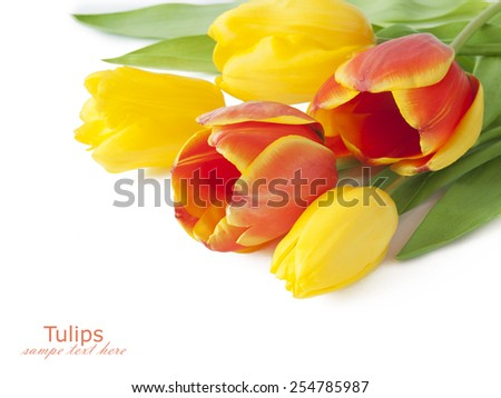 Tulips bunch isolated on white background with sample text - stock photo