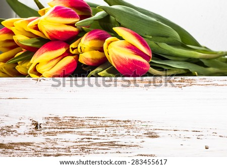 Tulips floral backgrounds. Arrangement of tulips on a wooden planks background for greetings card, invitation cards, mothers day or wedding invitation. - stock photo