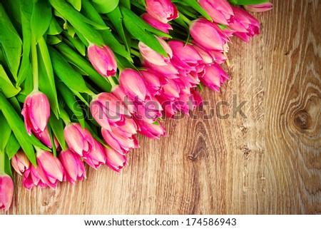 Tulips flowers - stock photo