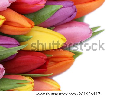Tulips flowers in spring or mother's day with copyspace for your own text - stock photo