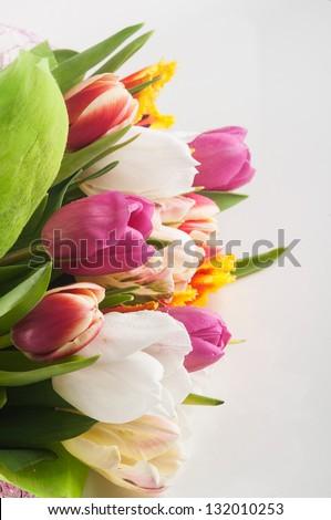 Tulips flowers on white background - stock photo