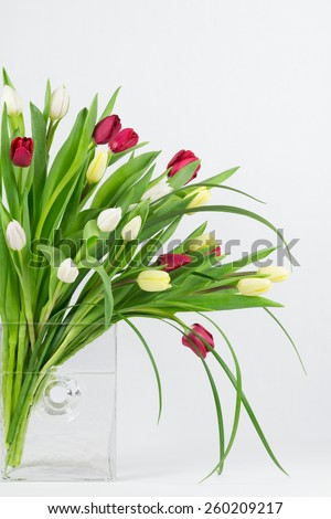 Tulips of mixed colors arranged in an asymmetrical design in a  glass vase. - stock photo