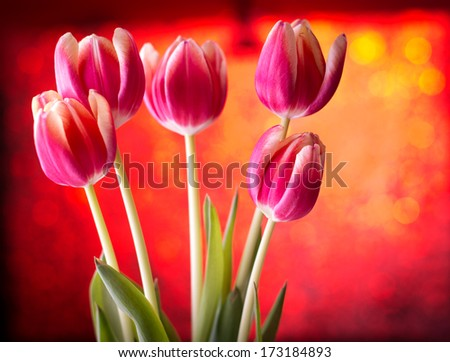 Tulips on red bokeh background - stock photo
