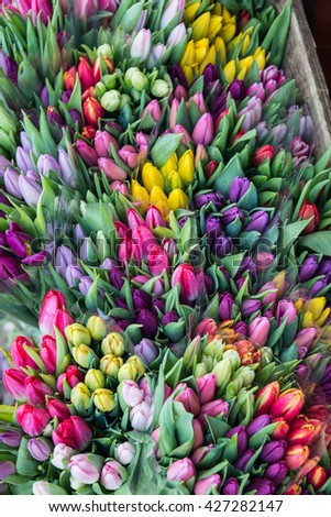 Tulips on sale in Utrecht, Netherlands - stock photo