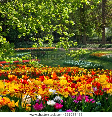 Tulips on the forest background. Spring landscape. - stock photo